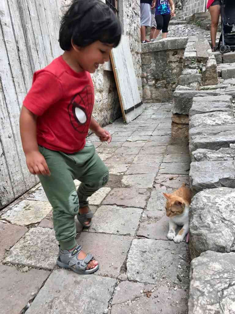 Aarav playing with the cats in Kotor