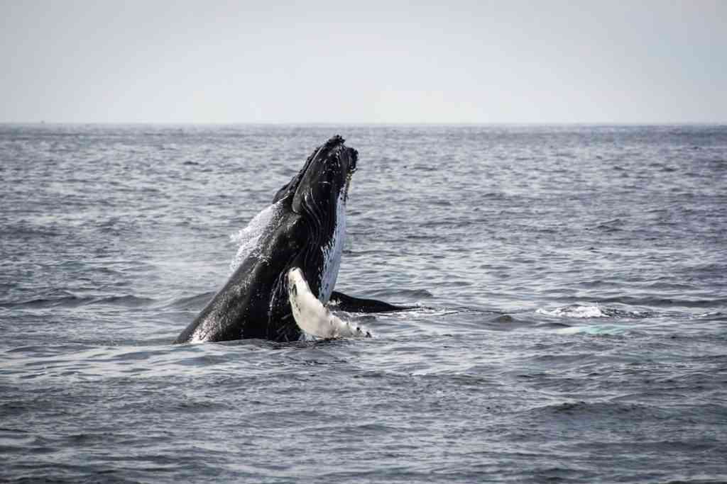 whale watching in Vancouver with kids, British Columbia