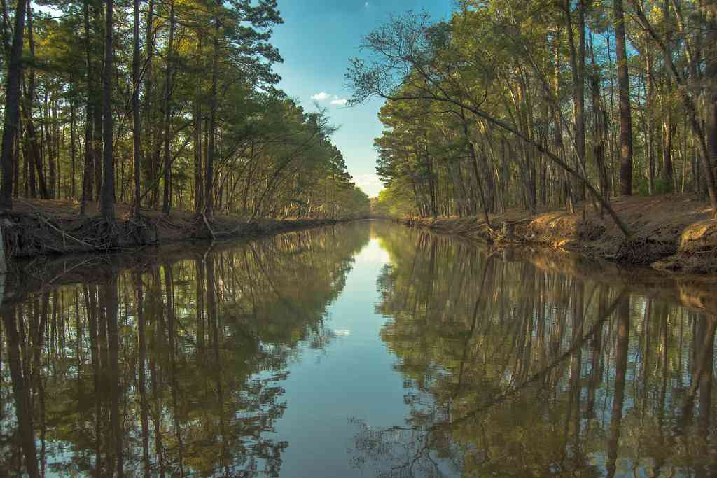 Caddo Lake is one of the best places to visit during COVID