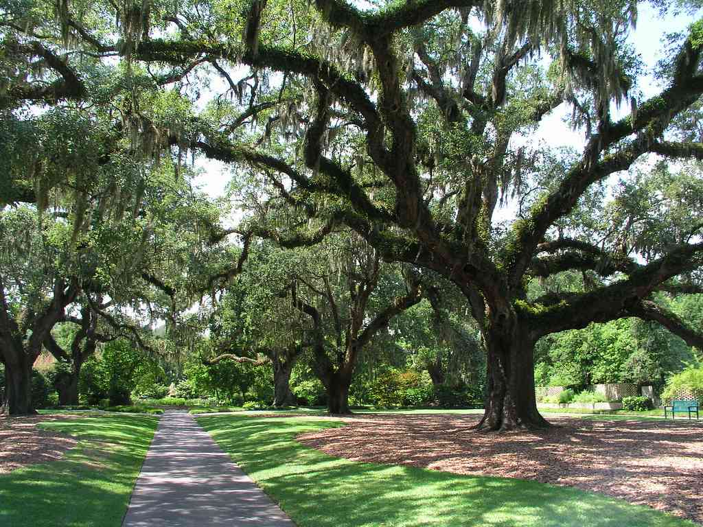 Brookgreen Gardens is one of the best things to do in Myrtle Beach with kids