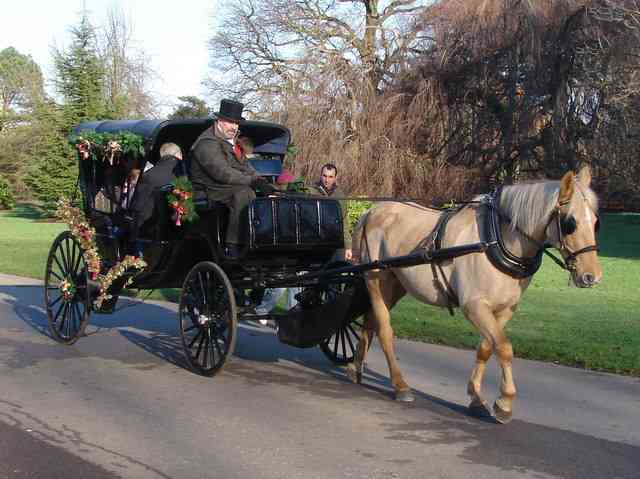 Carriage Tours is one of the best things to do in Charleton wth kids