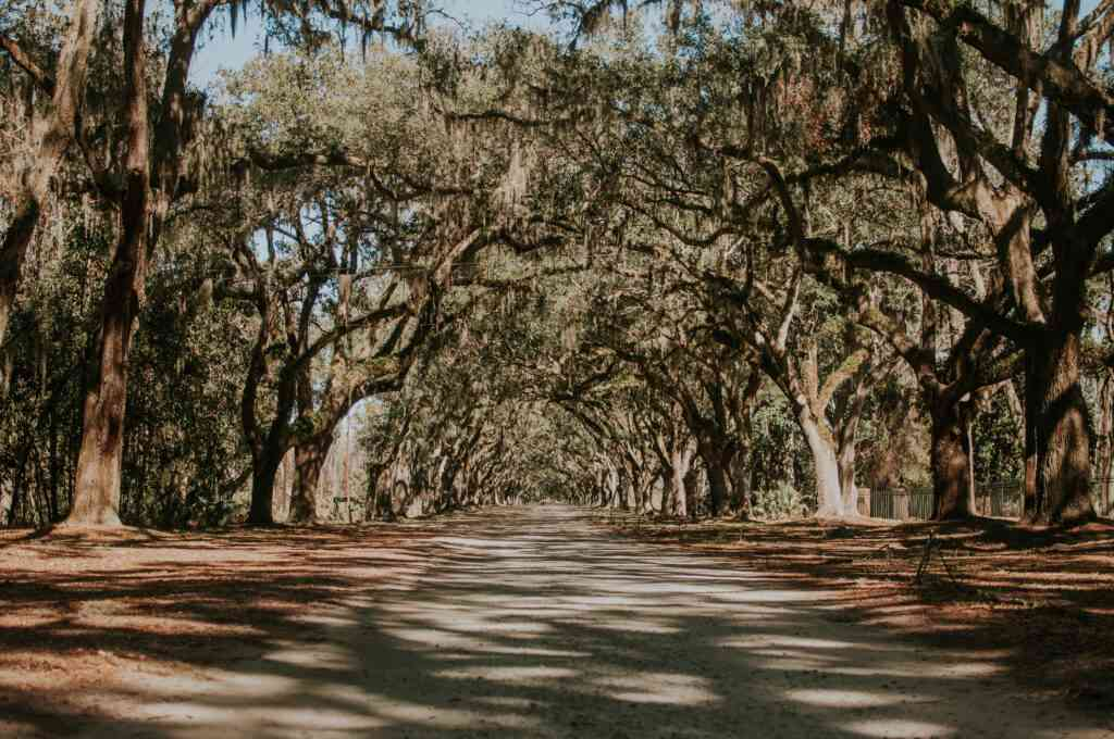 The wormloe historic site is one of the best things to do in savannah with kids