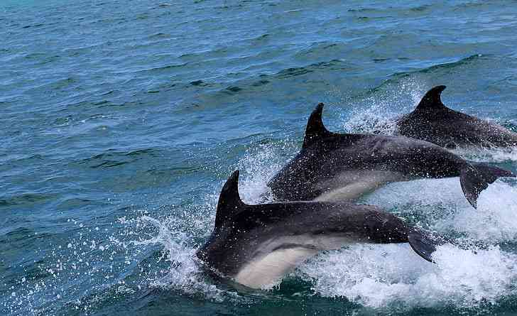 Dolphin sightseeing is one of the best things to do in Myrtle Beach with kids